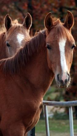 sidebar-two-horses